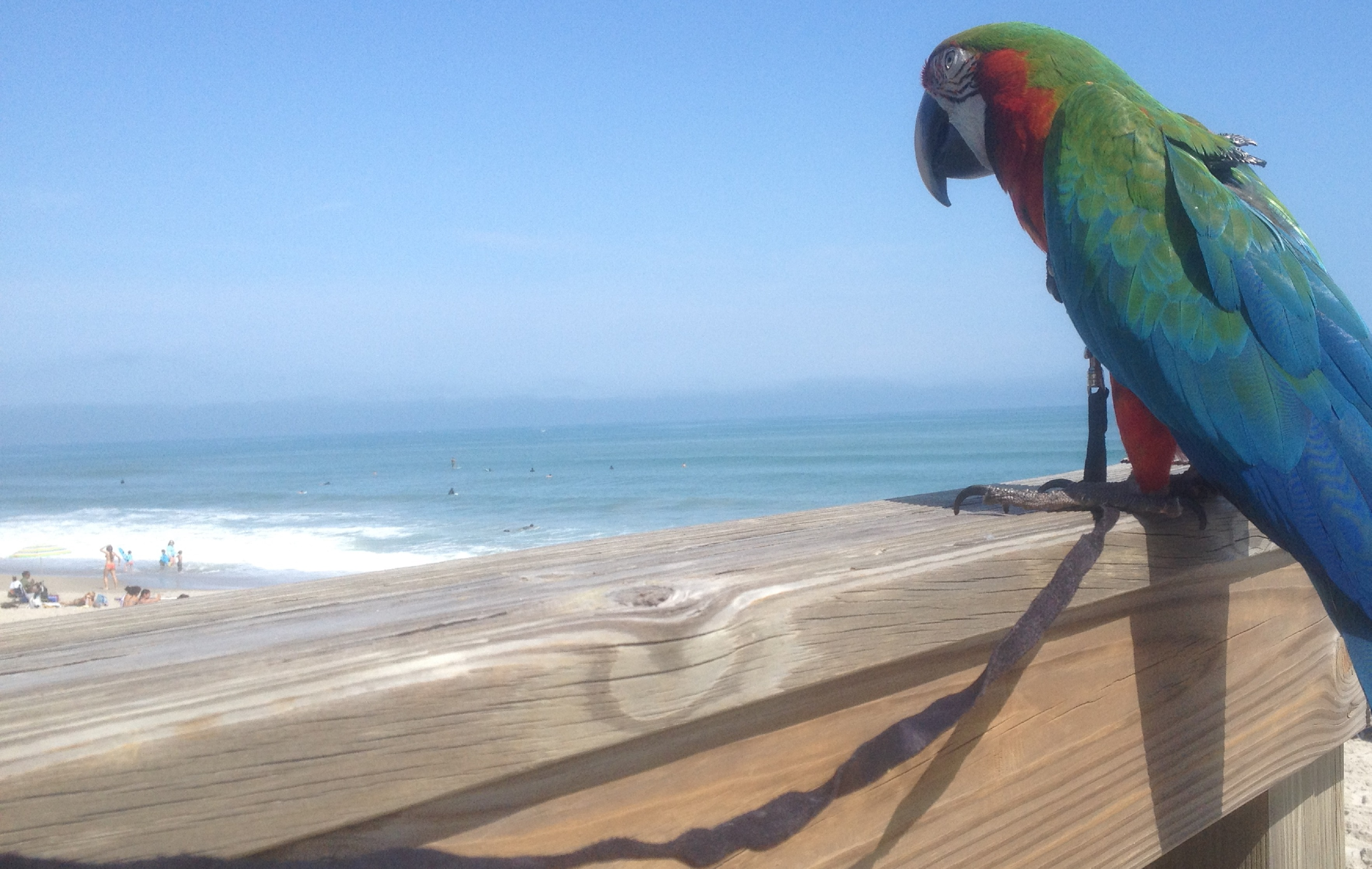 It's a beautiful day at the beach as Kosh watches the surfers and tourists.