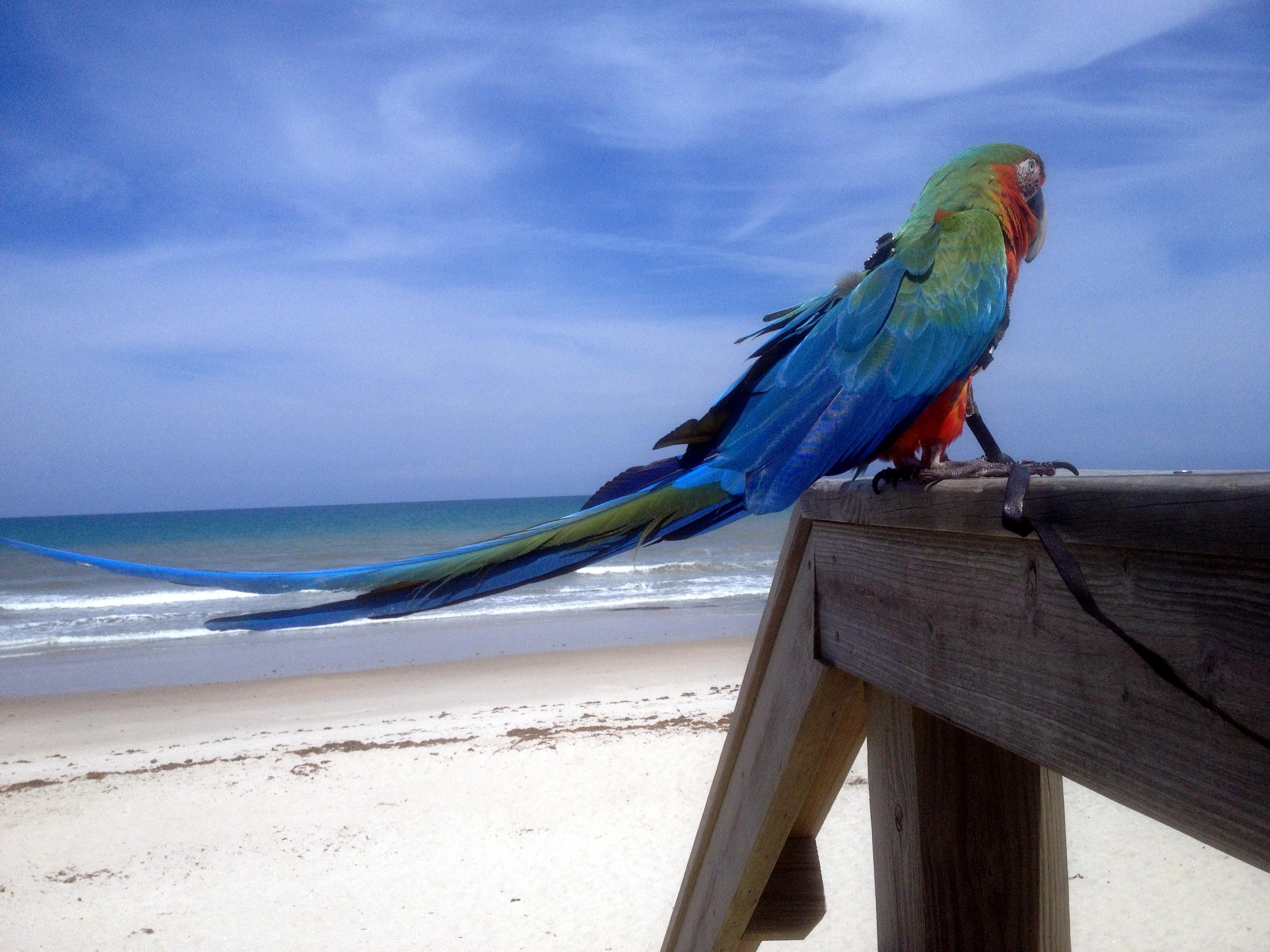 Kosh day dreams at the beach,